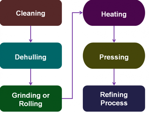 Groundnut Oil Processing Business Process in Detail